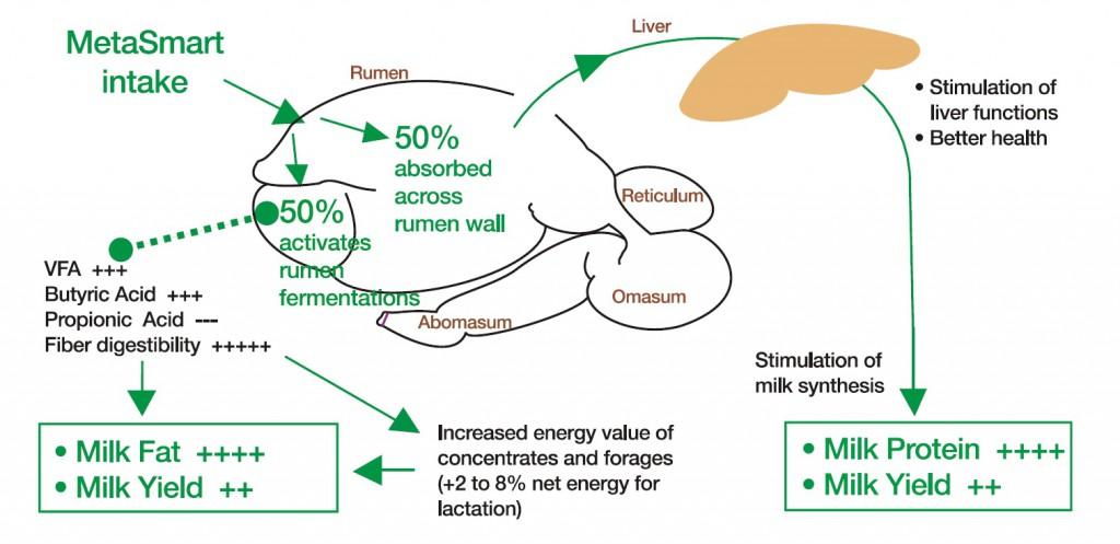 Rumen protected methionine
