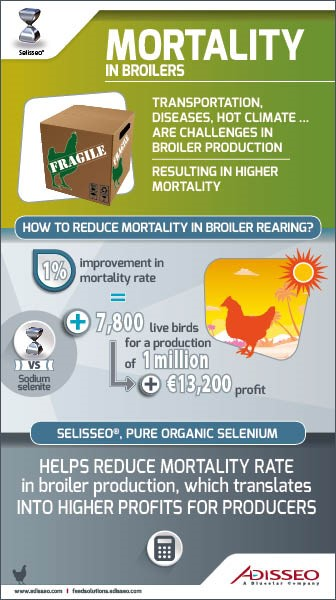 INFROGRAPHIC2_ MORTALITY