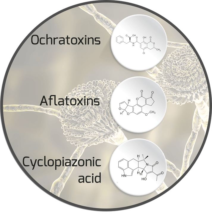 mycotoxins stored in fat