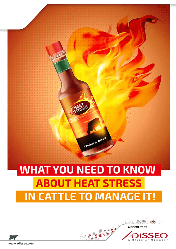WHAT YOU NEED TO KNOW ABOUT HEAT STRESS IN CATTLE TO MANAGE IT!