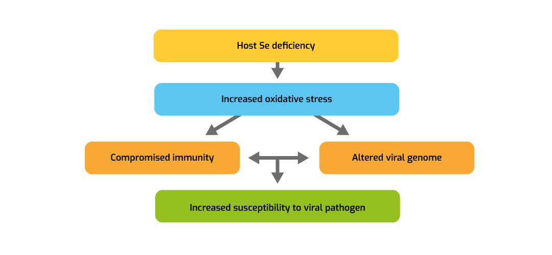 Figure 1. Effects of Se on viral diseases