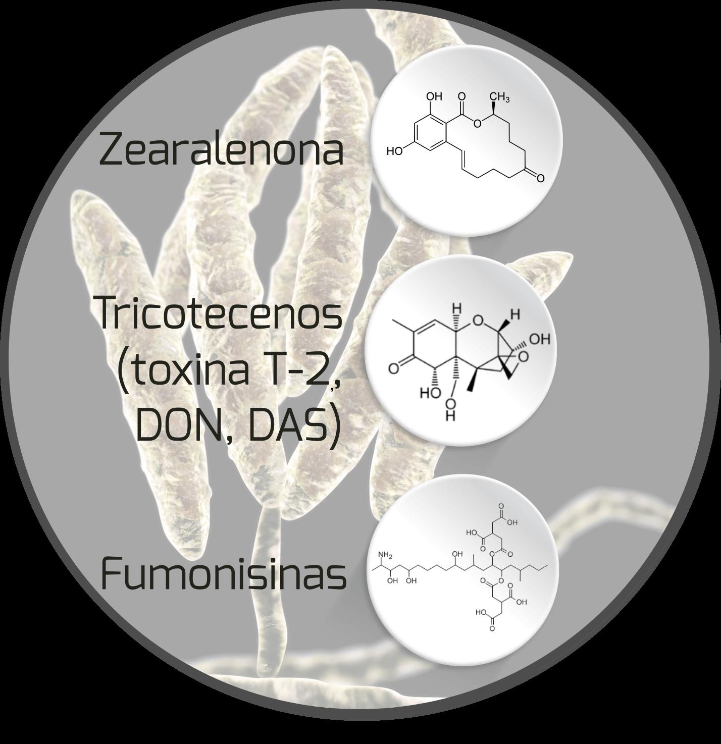mycotoxin-fusarium-mycotoxin
