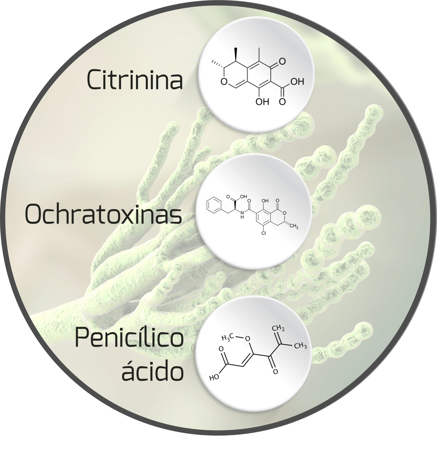 mycotoxin-penicillium-mycotoxin
