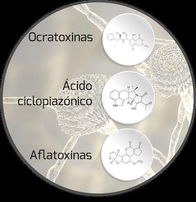 mycotoxin-aspergillus-mycotoxin